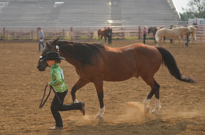 Justin Sheely | The Sheridan Press<br /> Brooke Krumm leads her horse in the halter class horse showmanship competition during the Sheridan County Fair at the Sheridan County Fairgrounds on Wednesday.