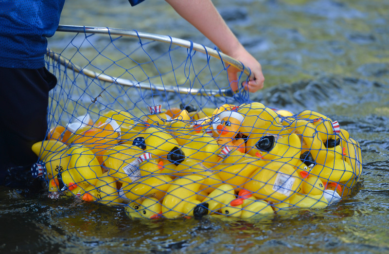 Justin Sheely | The Sheridan Press<br /> Rubber ducks are gathered from the Tongue River for the duck races during the 40th annual Dayton Days Saturday in the town of Dayton. The upper-ninety-degree weather did not stop Tongue River Valley residents from enjoying the day's festivities, including knocker ball, human foosball, duck races and the firemen's water fight.