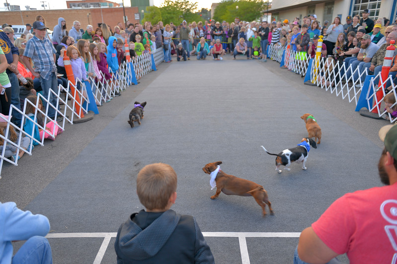 Justin Sheely | The Sheridan Press<br /> Dogs leave the starting line in a heat during Muddy Paw Prints' annual Wiener Dog Races Tuesday evening at Blacktooth Brewing Company.