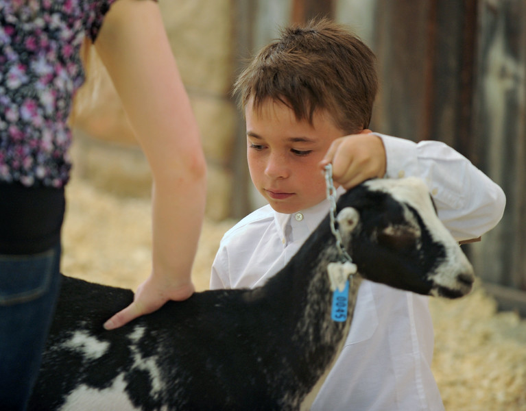 Jacob Brown holds the chain around his goat during judging at the Sheridan County Fair on Saturday, August 6 at the Sheridan County Fairgrounds. Mike Pruden | The Sheridan Press