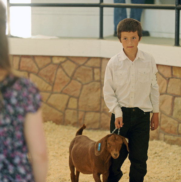 Logan Mediate shows his goat during the junior market goat showmanship contest at the Sheridan County Fair on Saturday, August 6 at the Sheridan County Fairgrounds. Mike Pruden | The Sheridan Press