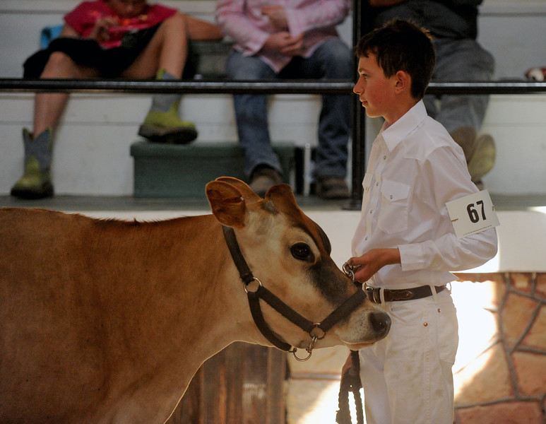 Micahel Shaw walks his dairy cow through the exhibit hall at the Sheridan County Fair on Saturday, August 6 at the Sheridan County Fairgrounds. Mike Pruden | The Sheridan Press