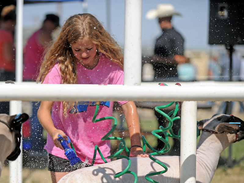 Fourteen-year-old Olivia Chase hoses down a sheep at the Sheridan County Fair on Saturday, August 6 at the Sheridan County Fairgrounds. Mike Pruden | The Sheridan Press