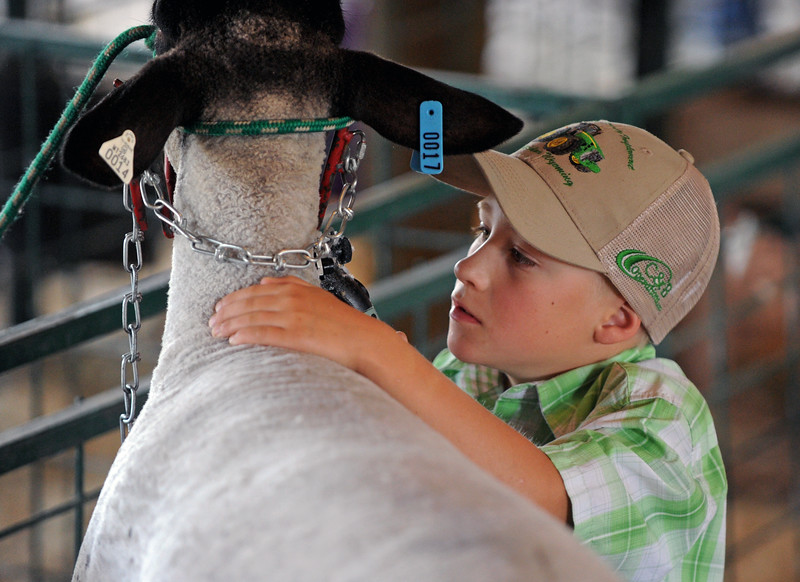 Will Edwards focuses on keeping his hand steady as he trims a sheep at the Sheridan County Fair on Saturday, August 6 at the Sheridan County Fairgrounds. Mike Pruden | The Sheridan Press
