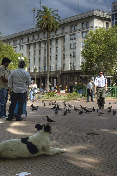 Dog and pidgeons