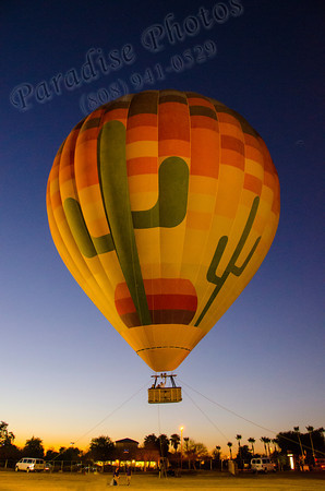 Balloon cactus twilight1096
