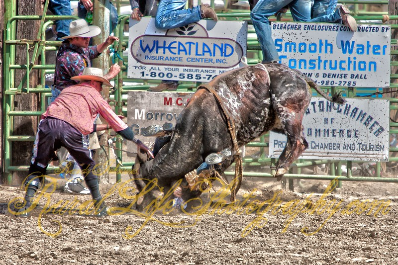 There is a Bull Rider under their somewhere!