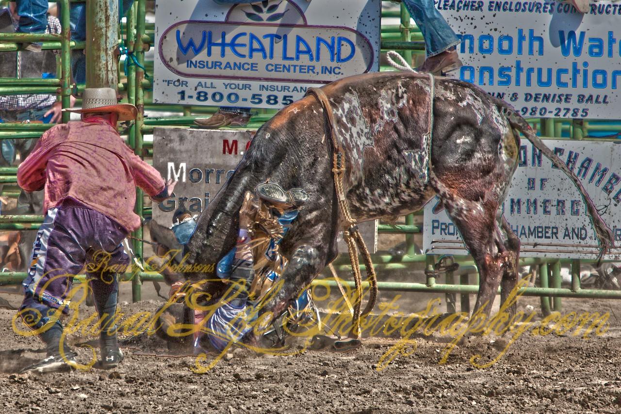 Bull Rider or Bull Wrestler?
