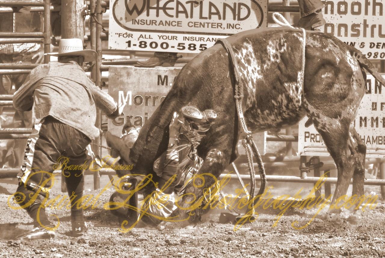 Bull Riding or Bull Wrestling