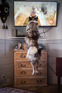 Watching tv with Arlo is not a passive activity