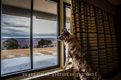 A dog's eye view of the Grand Canyon