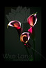 Drums<br /> <br /> Calla Lilies<br /> <br /> 021812_001915 ICC adobe 16in x 24in pic 20in x 30in matte