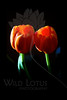 Lean<br /> <br /> Flowers pictured :: Tulips<br /> <br /> 101411_000907