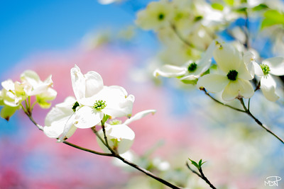 Spring Color Slender