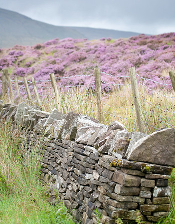 Country stone wall holding back the heather. - Rhondda Valley, Wales