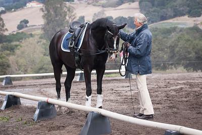 Black horse w blaze