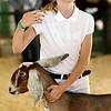 0811 fair animals 1