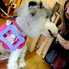 "Laura Cornish allows Sophie the dog to check out one of the pies at the sale. Sophie is wearing a photo of Aubrey Sacco.<br /> Tapestry Hair Salon of Boulder, held a fundraiser on Sunday for search efforts to find Aubrey Sacco,  a 23-year old CU graduate from Greeley, who is missing in Nepal.<br /> For more photos and a video of the event, go to  <a href=""http://www.dailycamera.com"">http://www.dailycamera.com</a>.<br /> Cliff Grassmick / November 14, 2010"