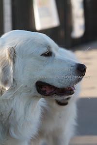 Walk Now for Autism Speaks - Austin - 2011-09-24 - IMG# 09- 011832