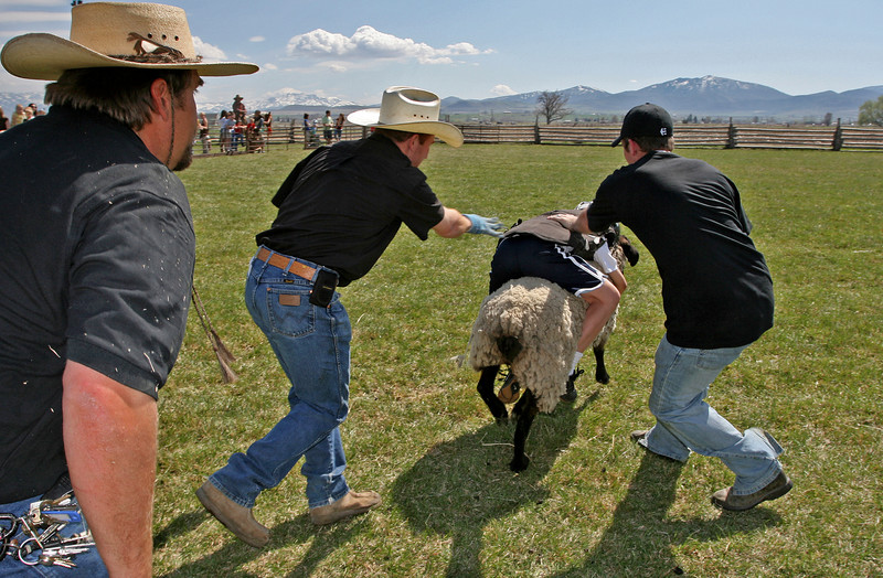 A young girl takes off on a short ride during mutton bustin'.
