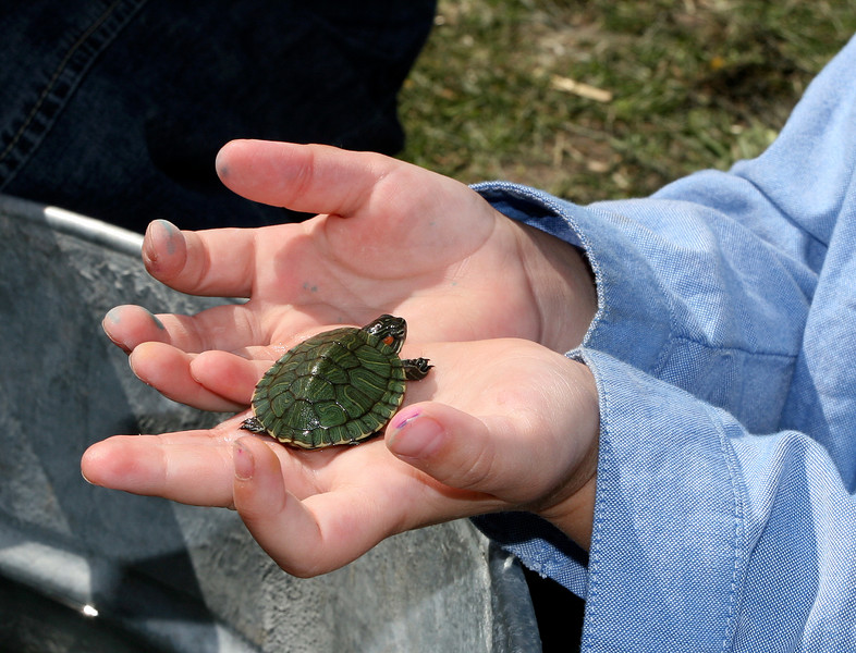 These turtles were no larger than a silver dollar!