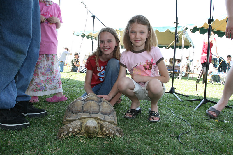 This Spur-thighed tortoise was a bit hit at the Festival Stage. She was brought by Reptile Rescue.