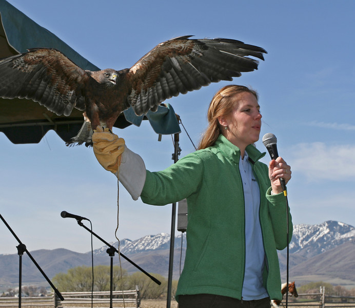 Susi from Willow Park Zoo presents information about raptors on our Festival Stage!