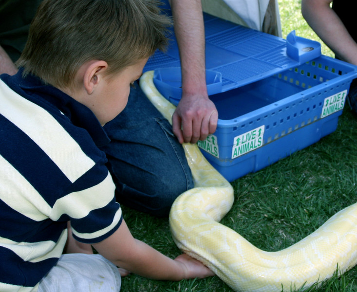 When it was warm enough, Reptile Rescue brought out their large albino python for visitors to see and touch.