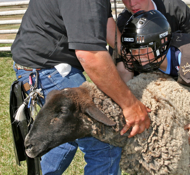 A youngster is just about ready to ride a sheep during mutton bustin'.