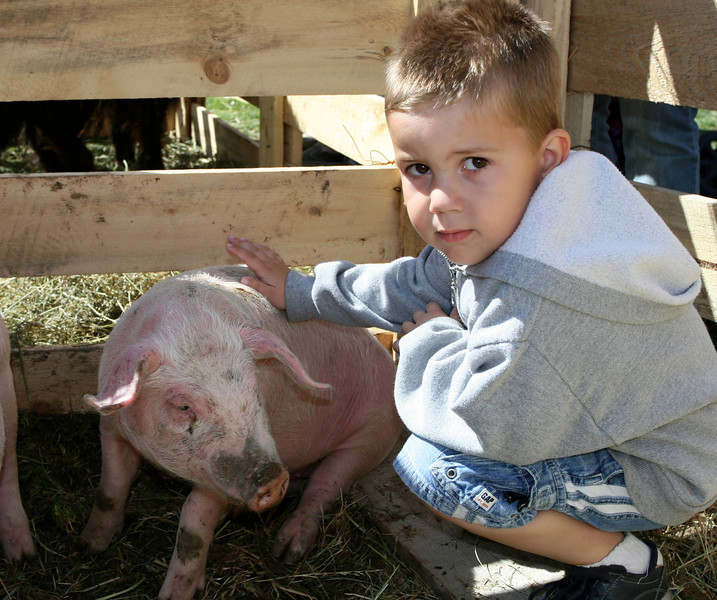 A youngster gets close to a pig.