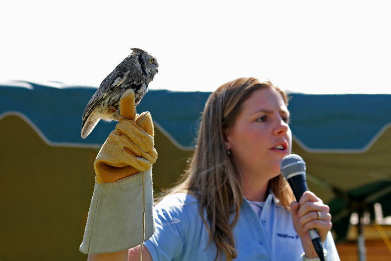 Susi put on a great raptor show at the Festival Stage. She came from Willow Park Zoo to help us out.