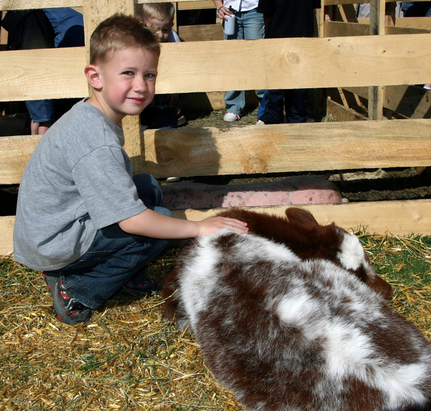 "A boy stops to smile as he pets his favorite calf. ""I like the pretty colors,"" he told me."
