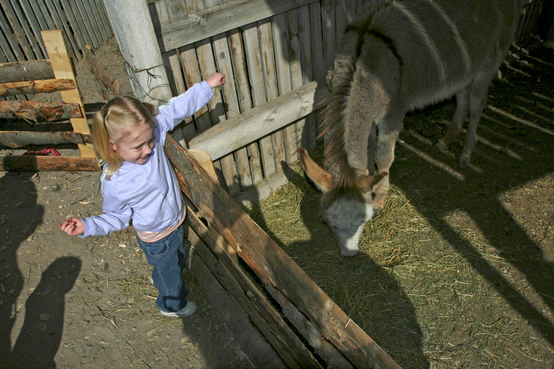 This little lass couldn't quite reach the donkey. Eventually, she was able to hug it.