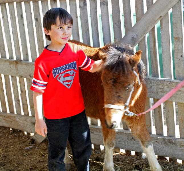 A youngster enjoys being close to a miniature horse, brought to the Heritage Center by the Platt family from Nibley.