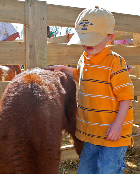 A young boy enjoys getting close to a calf.
