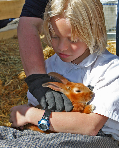 A rabbit breeder had plenty of different rabbits with which visitors could snuggle.