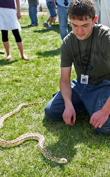 This young man from Reptile Rescue shows off a Texas Bull Snake, similar to our Gopher Snake in Utah.