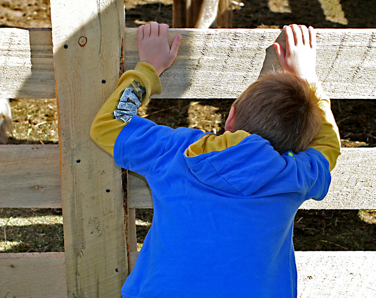 A boy looks through the fence at a mare and her baby.