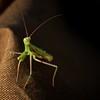 A praying mantis came to visit