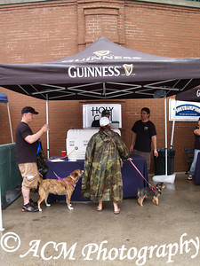 """""""Bark for Brew,"""" a dog-friendly, craft beer tasting was held Sunday April 22nd at Joe Riley Park and was presented by Fetch Doggie Day Care Charleston, SC"""