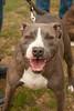 LR-Bark4Life2011-04889