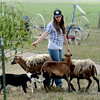 """Mikayla Nelson and her dog, Hope, demonstrate how herd dogs operate.<br /> Boulder County  hosted  Barnyard Critter Day  on June 24 at the Agricultural Heritage Center in Longmont, at 8348 Highway 66.<br /> For more photos and a video of the event, go to  <a href=""""http://www.dailycamera.com"""">http://www.dailycamera.com</a>.<br /> Cliff Grassmick / June 24, 2012"""
