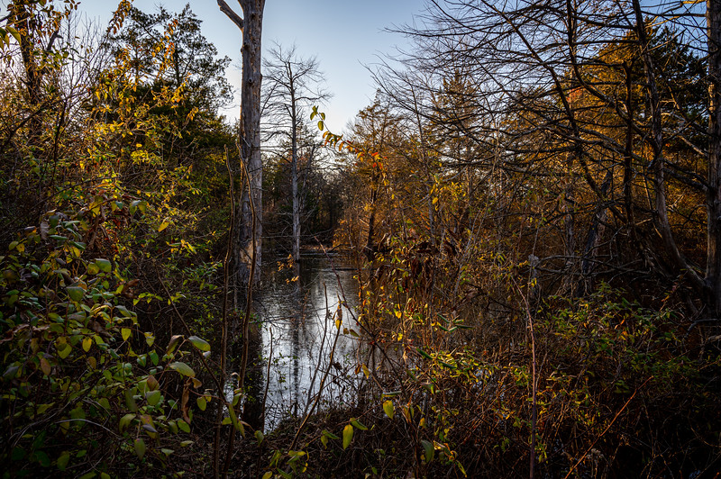 Three Creek Bassets 2020 - 2021 season