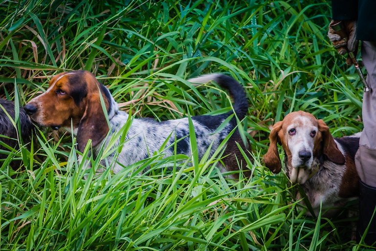 Three Creek Bassets Blessing of the Hounds 2018