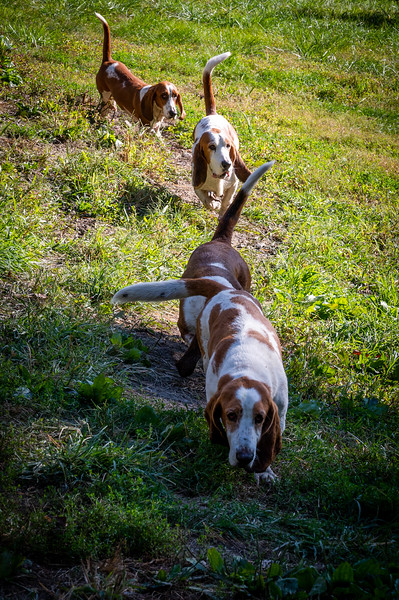 Three Creek Bassets 2020 - 2021