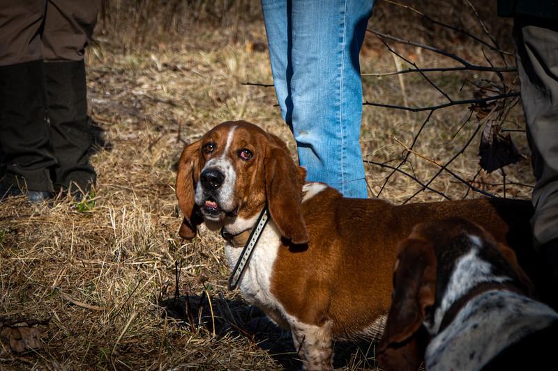 Viatle Farm Hunt