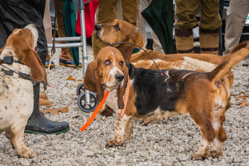 Blessing of the Hounds, Strathalbyn