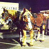Diane Raver | The Herald-Tribune<br /> A pair of horses made trips around town pulling the carriage.