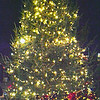 Diane Raver | The Herald-Tribune<br /> The downtown tree was lit up for the first time Dec. 7.