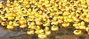 Baton Rouge Duck Race